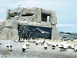 The gannet hide on Bird Island