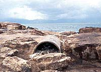 Artificial nest of African penguin